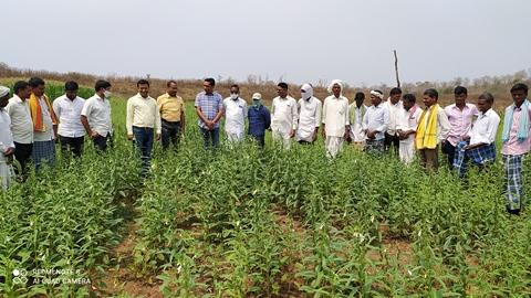 sesame seed production at Panduguda, Sirikonda mandal